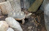 Fototapeta Zwierzęta - żółw