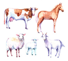 Farm Animals. Cow, Horse, Shee...