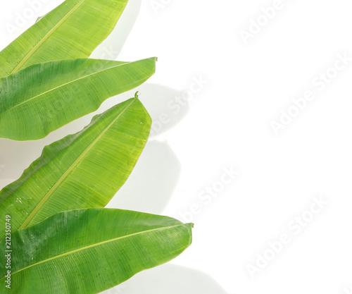 bananowy-lisc-i-cienie-na-bialym-tle