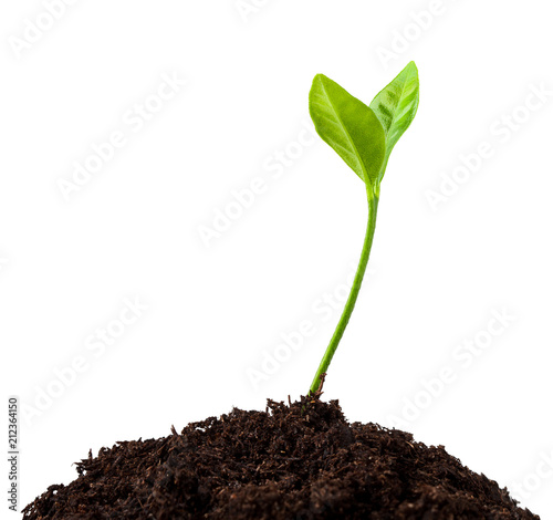 Fotografia young plant growing from soil, sprout isolated on white background, clipping pat