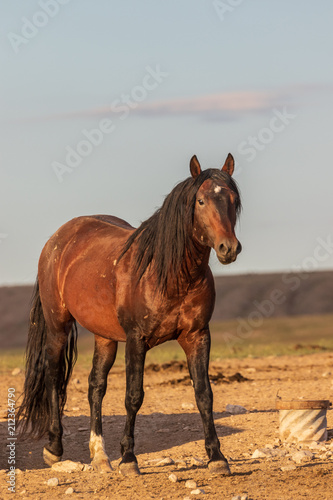 Photo  Beautiful Wild Horse in the Utah Desert