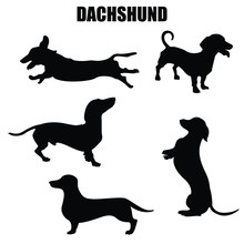 Dachshund Dog Vector Icons And Silhouettes. Set Of Illustrations In Different Poses.