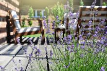 Lavender In The Modern Backyard Garden Terrace. Provence Style Tea Time