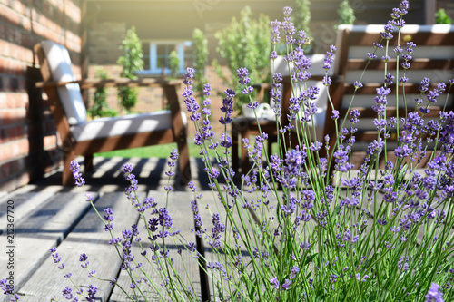 Poster Jardin Lavender in the modern backyard garden terrace. Provence style tea time