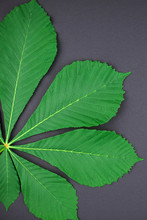 Pattern With Fresh Green Chestnut Leaves