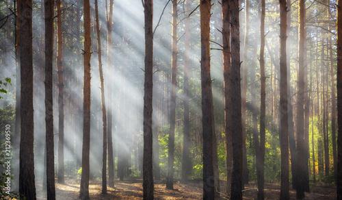 Smoke in the woods, the rays of the sun illuminate the smoke Fotobehang