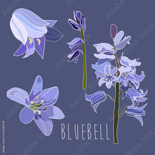 Photo bluebell vector illustration. hand drawn sketch.