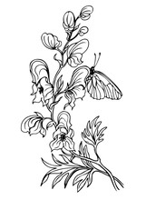 Aconite Flower (monkshood) And Butterflies, A Contour Black And White Vector Illustration.