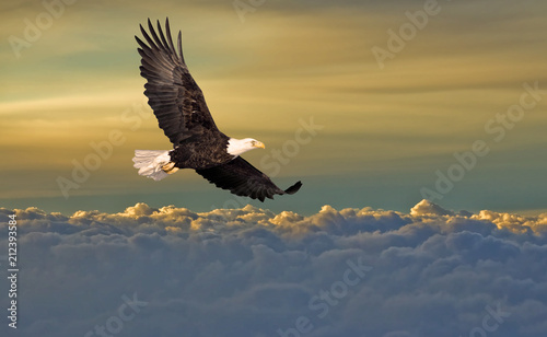 Photo sur Aluminium Aigle Bald eagle flying above the clouds