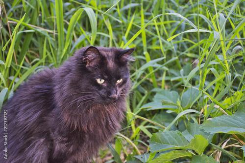 Photo  Wild Cat