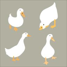 Duck White Set Vector Illustra...