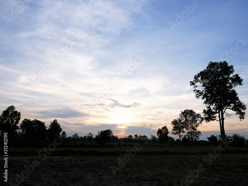 Staande foto Zwart Beautiful Sunset, sunlight and tree field landscape in the evening.