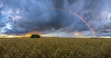 Fototapeta Tęcza - rainbow over the field after a morning downpour