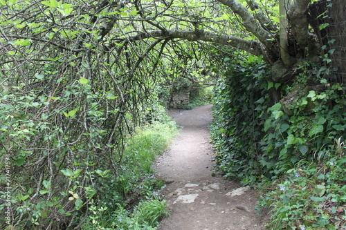 Foto op Canvas Weg in bos camino rio majaceite