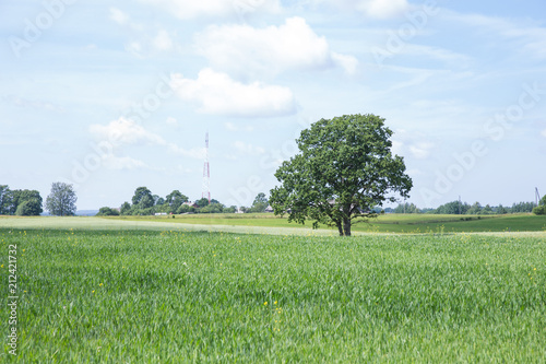 Foto op Canvas Weide, Moeras Tree and meadow, blue sky. Nature and fresh air.