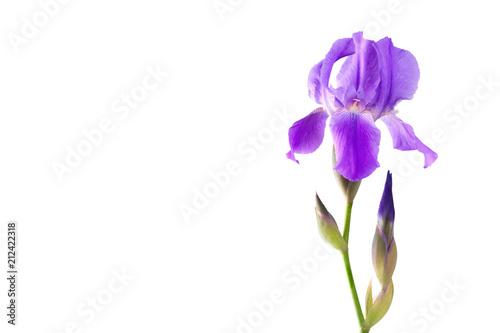 In de dag Iris Flower iris