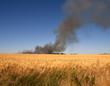 Brennendes Feld in Sommerlandschaft mit strahlend blauem Himmel und sattem Weizenfeld