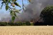 Helles Weizenfeld mit Apfelbaumzweig im Vordergrund und Rauch brennender Felder im Hintergrund