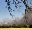 Brennende Felder mit dickem Rauch und Zweigen im Vordergrund