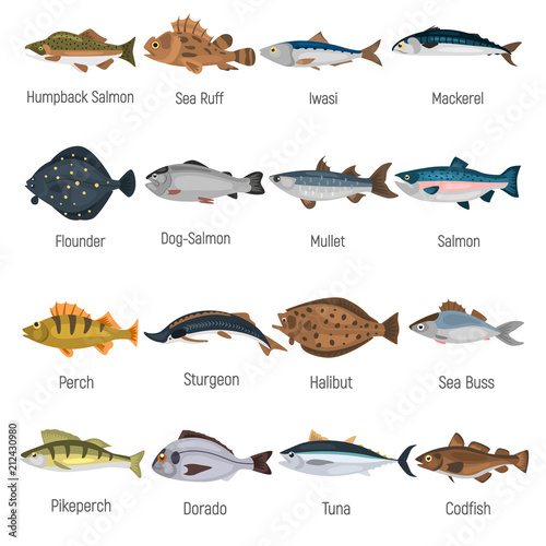 Fotografie, Obraz  Commercial fish of the world color icons set isolated on white