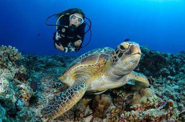 Djevojčica i kornjača