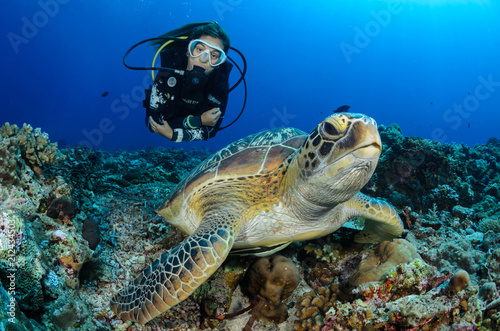 Photo  Girl and turtle