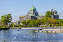 Seagulls Swimming In Corrib River And Galway Cathedral