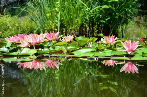 Seerosenteich Im Botanischen Garten In Freiburg Buy This Stock