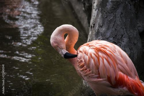 Foto op Aluminium Flamingo フラミンゴ
