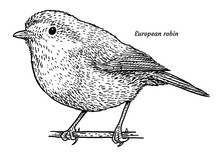 European Robin, Erithacus Rubecula Illustration, Drawing, Engraving, Ink, Line Art, Vector