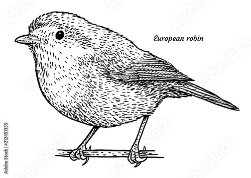 Foto  European robin, Erithacus rubecula illustration, drawing, engraving, ink, line a