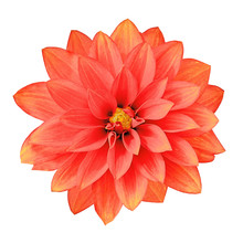 Flower Red Yellow Dahlia Isola...