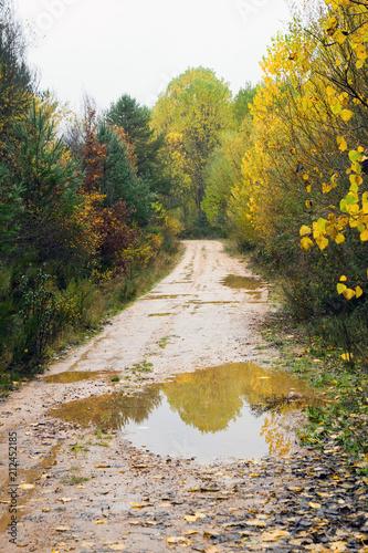 Láminas  Camino de tierra, con charcos de agua  por la lluvia , entre Arboleda variada O