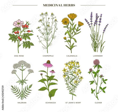 Plakaty botaniczne medicinal-herbs