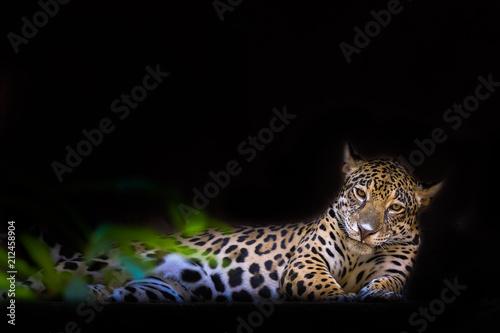 Foto op Canvas Luipaard Close-up leopard portrait on dark background