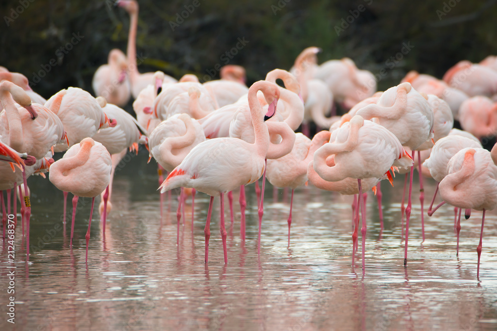 Flamingos in der Camarque in Frankreich