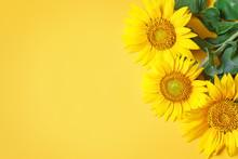 Beautiful Sunflowers On Yellow...