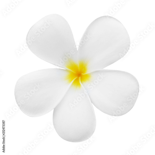 Foto op Canvas Frangipani plumeria flower bloom isolated on white