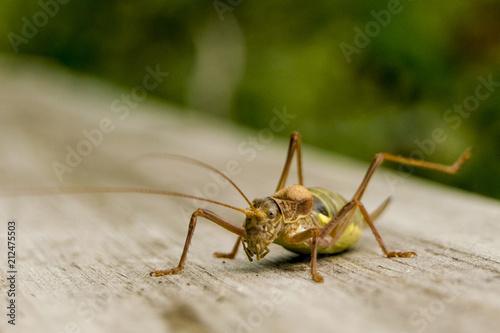 Fotografía  Insecto 1