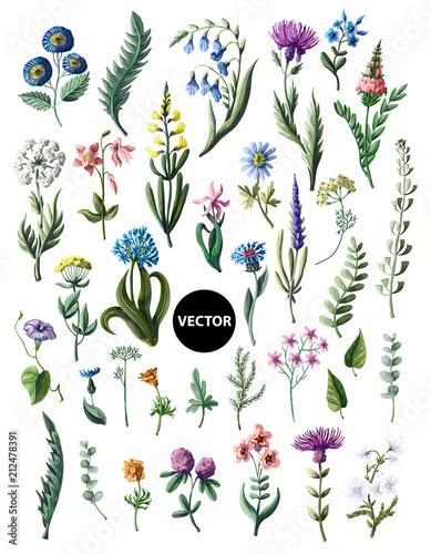 Foto  Big set of wild flowers isolated. Vector illustration.