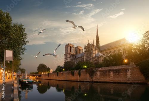 In de dag Historisch geb. Seagulls over Notre Dame