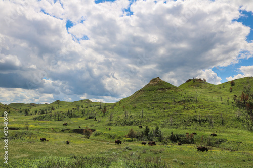 Foto op Canvas Bleke violet American bison grazing in Theodore Roosevelt National Park, North Dakota