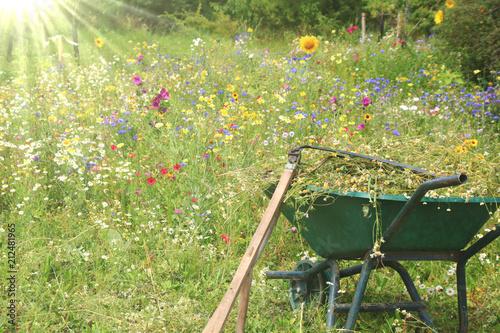Gartenarbeit Blumenwiese Mahen Buy This Stock Photo And Explore