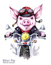 Children Illustration. Watercolor Grange Pig In Jacket On Motorbike. Funny Biker. Transport. Symbol Of 2019 Year. Perfect For T-shirts, Posters, Cards, Phone Cases.