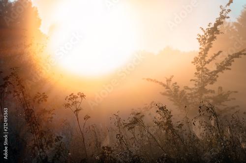 In de dag Ochtendgloren autumnal foggy sunrise landscape. Dry grass, fog