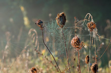 Big Dry Grass And Bushs In The Fog At Sunrise