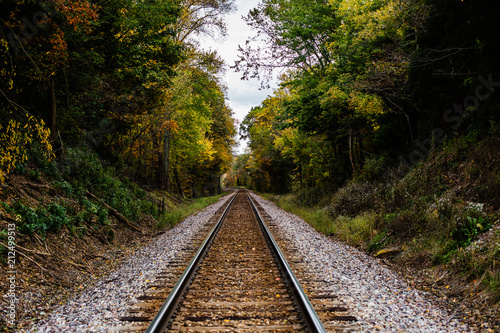 Fotografie, Obraz  An abandoned railroad in the middle of a forest in fall