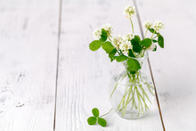 White Clover In A Glass Jug On...