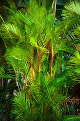 Fototapeta Eko Plant leaf