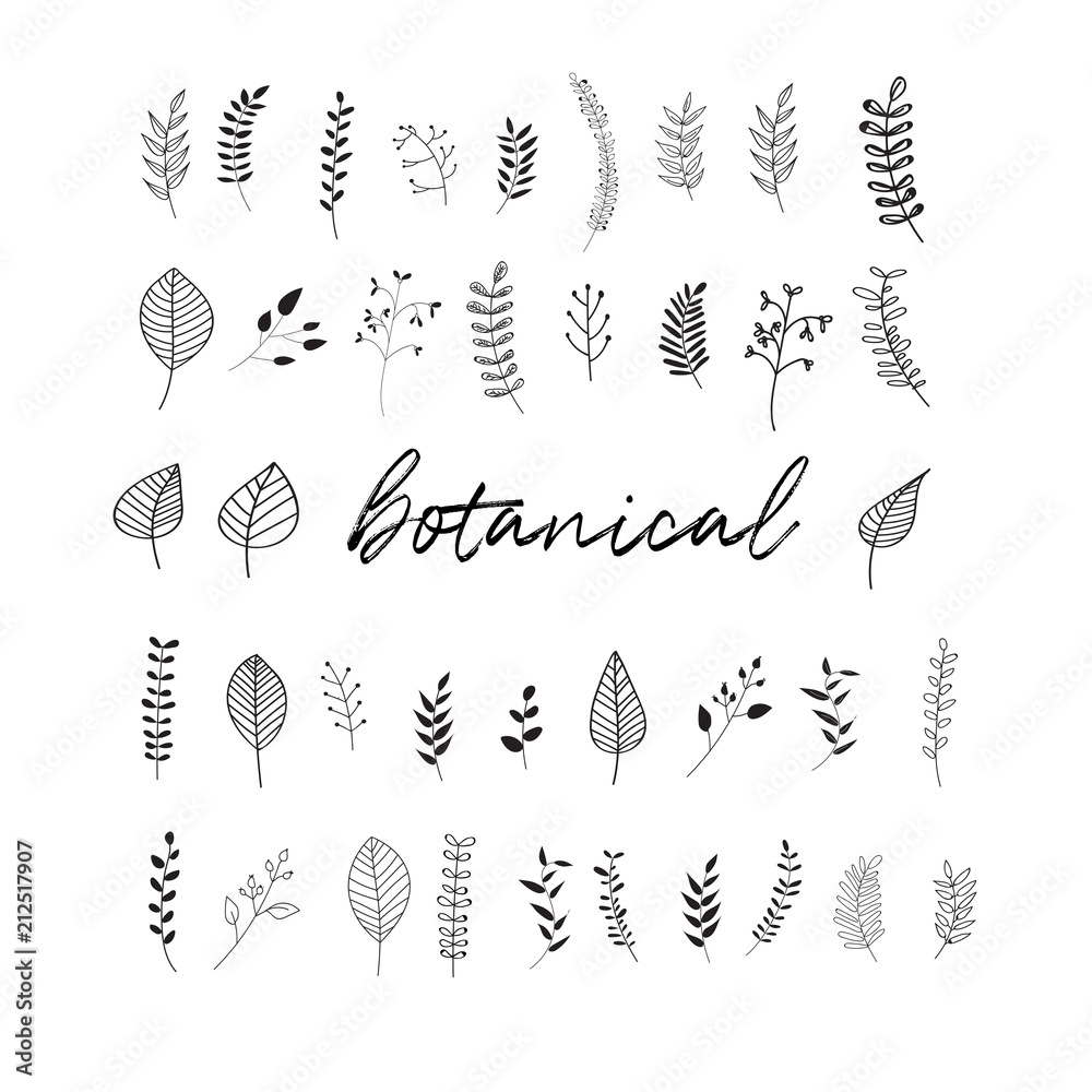 Fototapeta vector botanical doodles illustration elements. hand drawn drawing sketch. leaves leaf grass rowan
